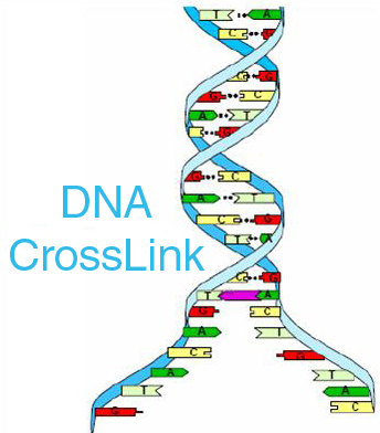 DNA Linking